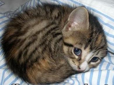 20150916 ccy cat