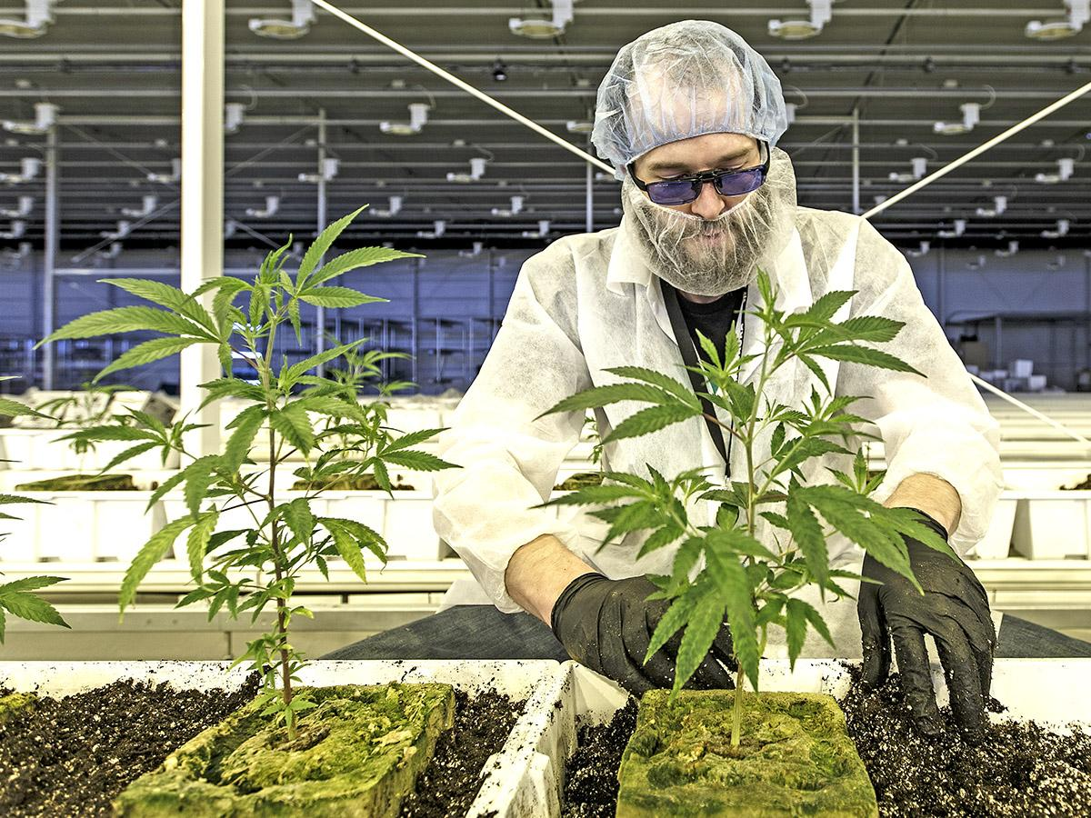 Cannabis stocks: Will 2020 be better after dismal 2019?